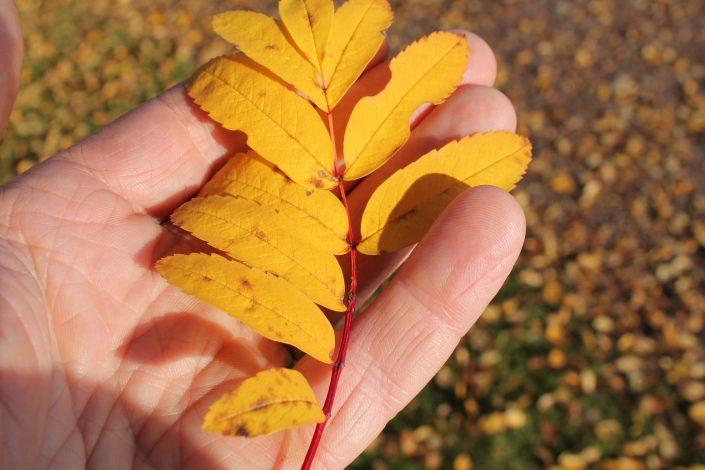 Autumn in Orsa